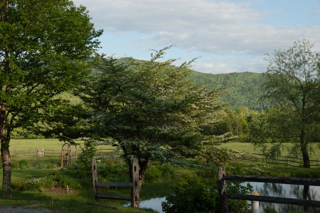 Meadow and pond_